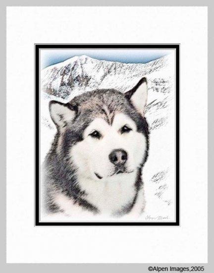 Alaskan Malamute Art Print Matted 11x14