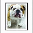 Bulldog Dog Art Print Matted 11x14