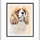 Cavalier King Charles Spaniel Matted Art Print 11x14