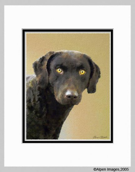 Chesapeake Bay Retriever Dog Art Print Matted 11x14