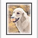 Golden Retriever Dog Art Print Matted 11x14
