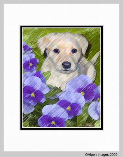 Golden Yellow Lab Labrador Retriever Puppy Matted11x14