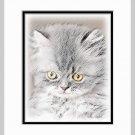 Gray Kitten Cat Art Print Matted 11x14