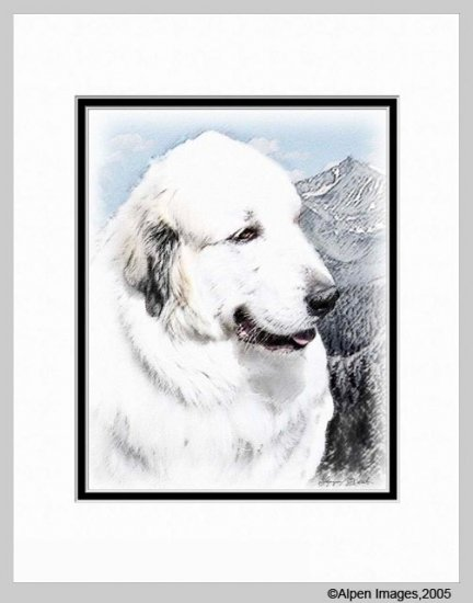 Great Pyrenees Dog Art Print Matted 11x14