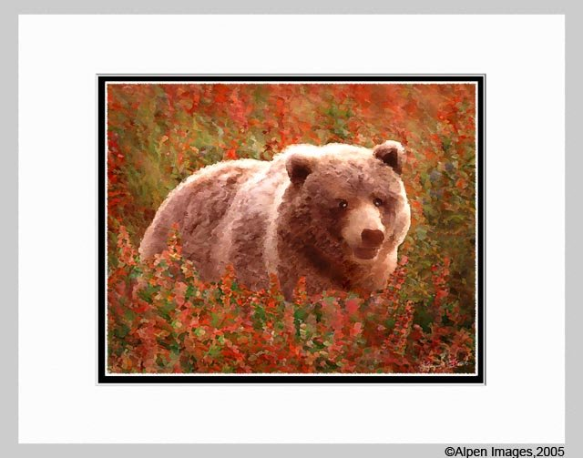 Grizzly Bear in Fireweed Art Print Matted 11x14
