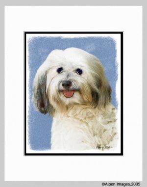 Havanese Dog Matted Art Print 11x14