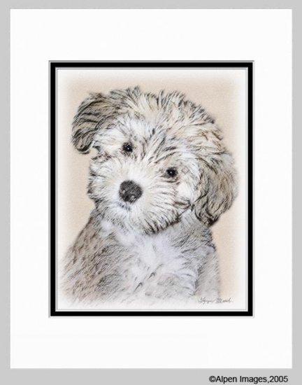 Havanese Puppy Matted Art Print 11x14