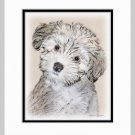Havanese Puppy Matted Art Print 11x14