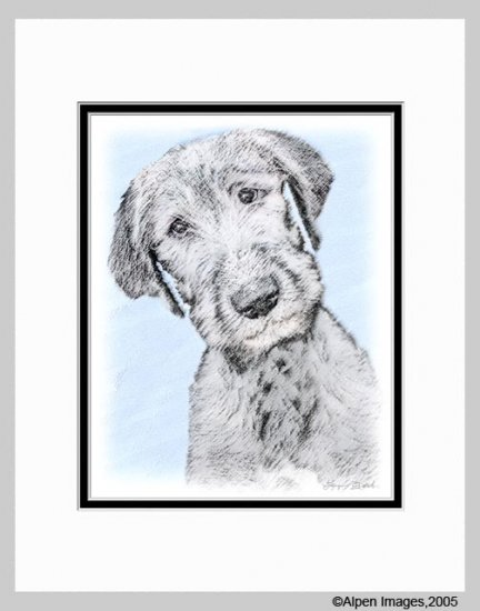 Irish Wolfhound Dog Art Print Matted 11x14