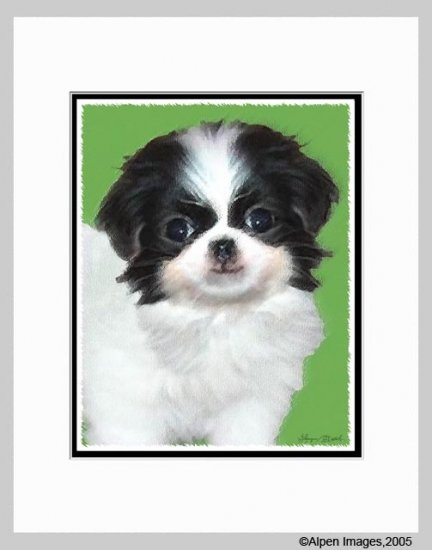 Japanese Chin Dog Art Print Matted 11x14