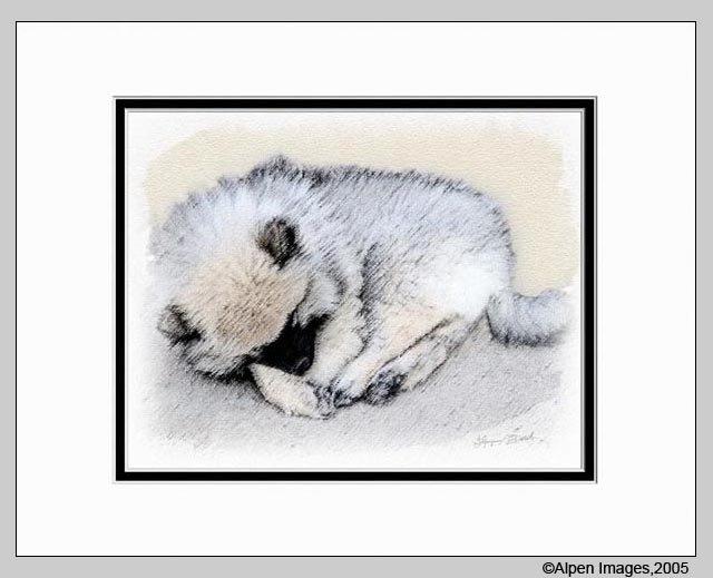 Keeshond Dog Art Print Sleeping Puppy Matted 11x14