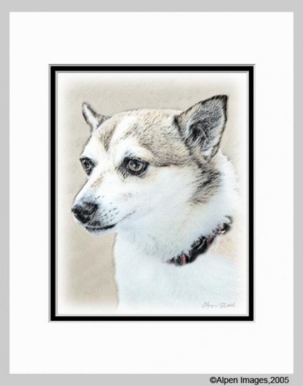 Norwegian Lundehund Dog Art Print Matted 11x14