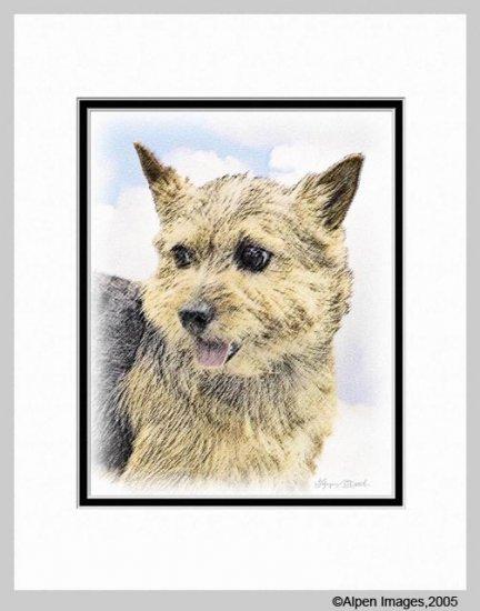Norwich Terrier Art Print Matted 11x14