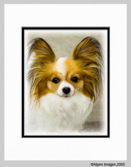 Papillon Matted Dog Art Print 11x14