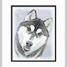 Siberian Husky Dog Art Print Matted 11x14