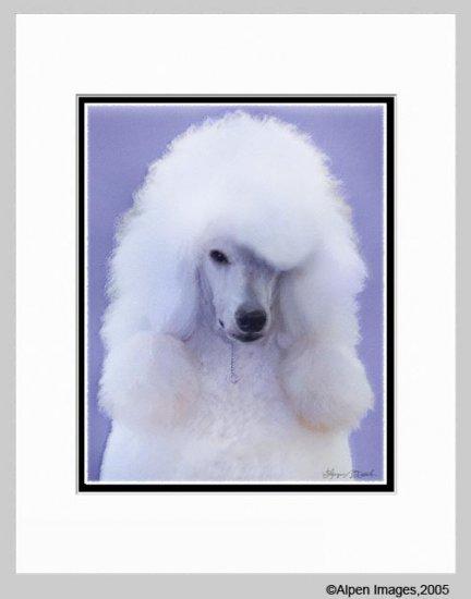 Standard Poodle Matted Art Print 11x14