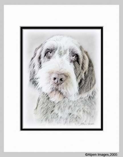 Wirehaired Pointing Griffon Dog Art Print Matted 11x14
