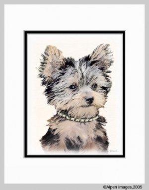 Yorkshire Terrier Yorkie Puppy Matted Art Print 11x14