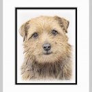 Norfolk Terrier Dog Art Print 11x14 Matted