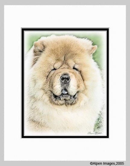 Chow Chow Dog Art Print 11x14 Matted