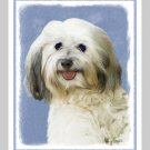 6 Havanese Note or Greeting Cards