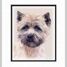 Cairn Terrier Dog Art Print Matted 11x14