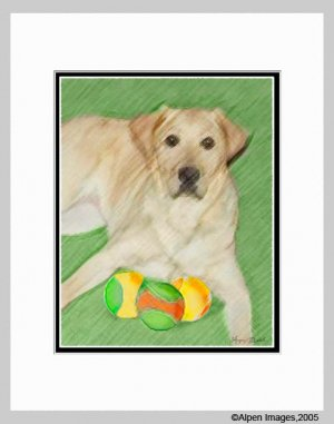 Labrador Retriever Yellow Lab Matted 11x14