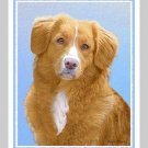 6 Nova Scotia Duck Tolling Retriever Note or Greeting Cards
