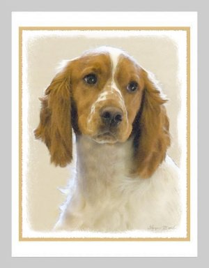6 English Springer Spaniel Note or Greeting Cards