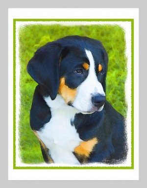 6 Bernese Mountain Dog Puppy Note or Greeting Cards