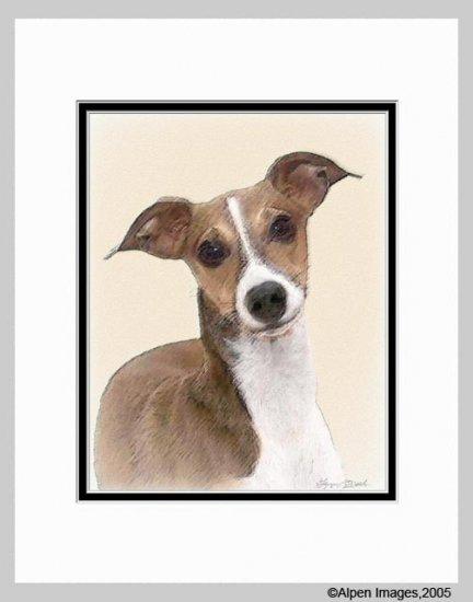 Italian Greyhound Art Print Matted 11x14