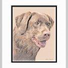 Chocolate Lab Labrador Retriever Art Print Matted 11x14