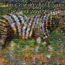 Amazing ZEBRA Back to Nature montage 1 of just 25