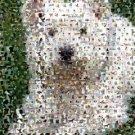 Amazing West Highland White Terrier Dog Montage limited signed coa 1-25