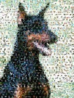 Amazing Doberman Pinscher Dog Montage Limited Edition
