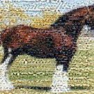 Amazing Clydesdale Horse Montage Limited Edition w/COA