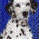 Amazing Dalmation Dog Montage Limited Edition