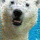 Amazing Polar Bear Wild Animals Montage Limited Edition