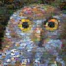 OWL Wild Animals Montage limited edition art print COA