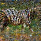 Amazing ZEBRA Wild Animals Montage limited art print