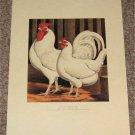 Antique Chicken Poultry Print Miss Fairhursts White Dorkings 1873