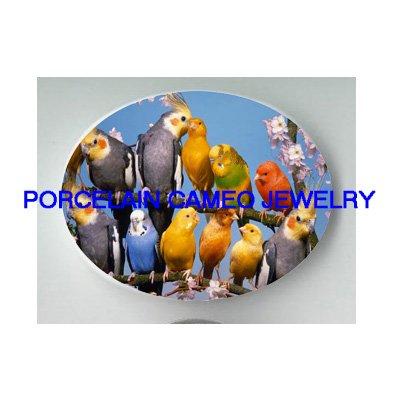 COCKATOO PARAKEET BUDGERIGAR BIRD COLLAGE CHERRY BLOSSOMS * UNSET CAMEO PORCELAIN CABOCHON