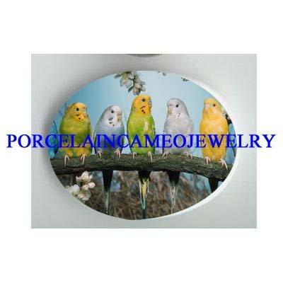 5 PARAKEET BUDGIE BIRD COLLAGE  * UNSET CAMEO PORCELAIN CABOCHON