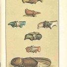 Zuni Fetishes by Frank Hamilton Cushing Facsimile Of 1883 Test by Mark Bahti 1987 SC Booklet