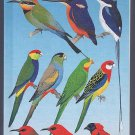 The Slater Field Guide to Australian Birds By Peter Slater, Pat Slater, Raoul Slater SC Book