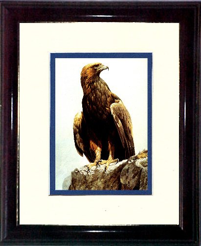 Bateman's Golden Eagle #A454