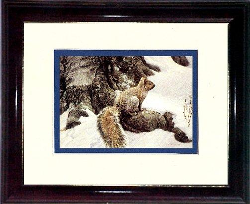 Batenan's Squirrel #A466