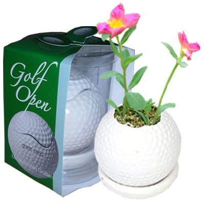 Mini plants;Ceramic Golf ball flowerpot; Toy Golf ball