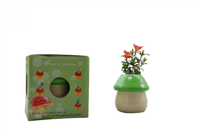Mushroom plants; Mushroom gift;Ceramic Mushroom(green)