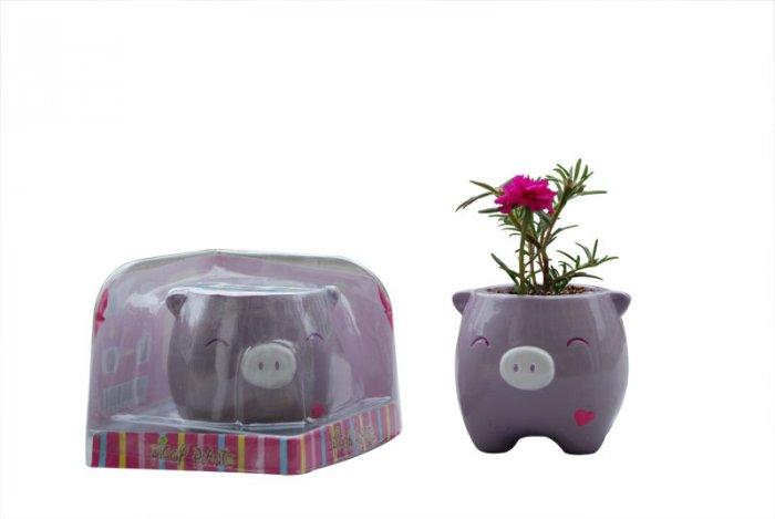 Piggy Plant;garden craft,home decoration(purple )